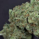 Ghost Train Haze Review – Take A Ride