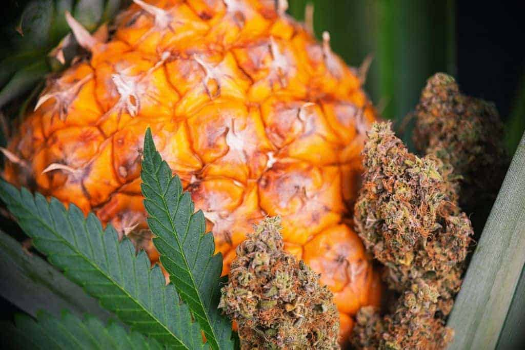 Pineapple Kush Review – Pure Pleasure!