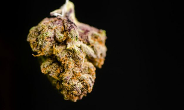 Purple Kush Review – Purple pleasure