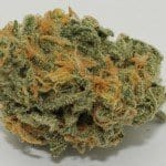 Acapulco Gold Review – Southern Sensation