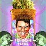 Tom Cruise Purple Marijuana Strain Review