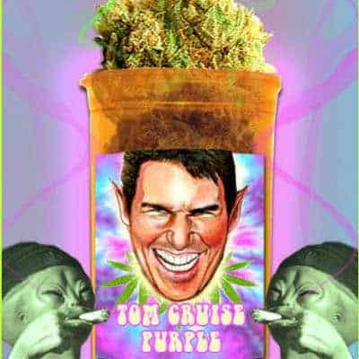 Tom Cruise Purple Marijuana Strain Review
