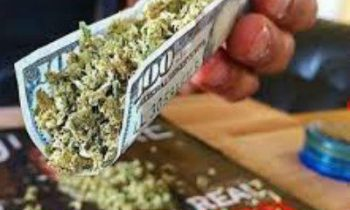 100 Dollar Bill Rolling Papers Review