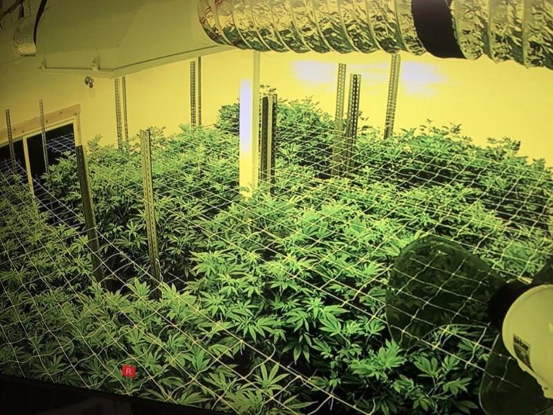 Northern lights indoor gardens marijuana dispensary 420 for Indoor gardening rainier oregon