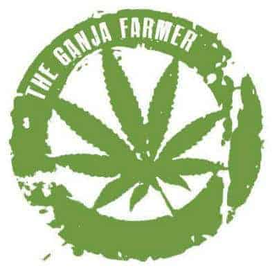 Ganja Farmer Strain Review