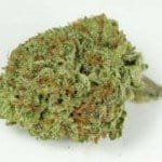 MILF Marijuana Strain