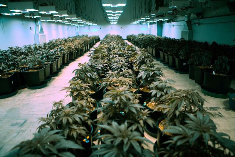 0619_marijuana03