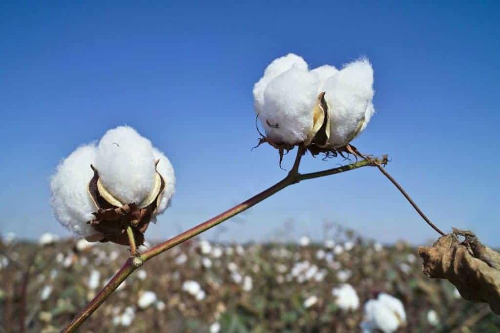 Hemp VS Cotton 2